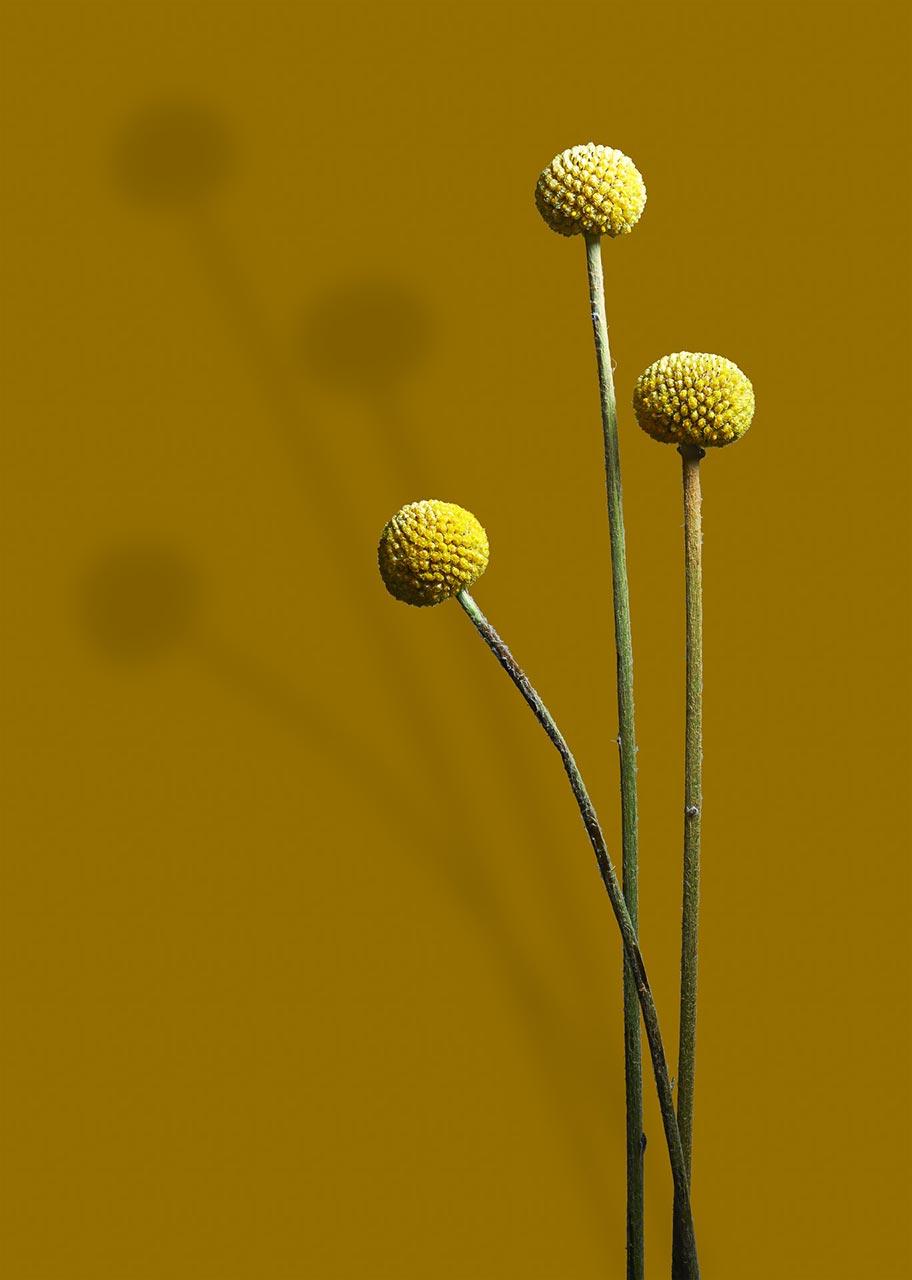 Lohmann Design Blomster Livsstil